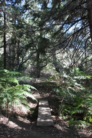 Watershed Trail at VMF's Volcan Mountain Nature Center