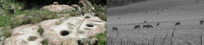 Morteros & Historical photo of cows grazing on Volcan Mountain